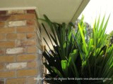 Bridging and Termites by Silks Pest Control - Your Brisbane Termites Expert