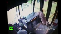 Doe D'oh! Deer crashes through bus windshield in Pennsylvania
