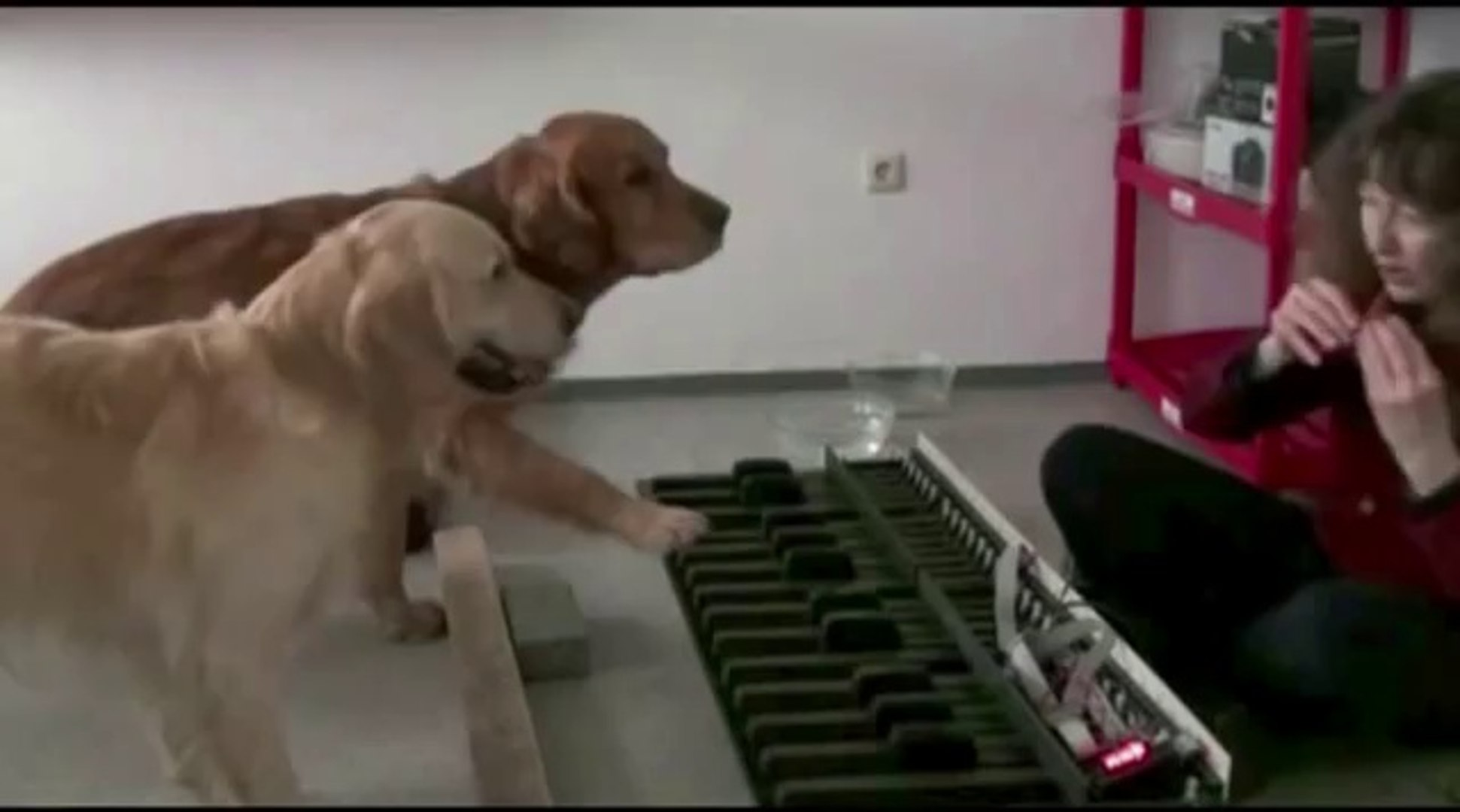 These Dogs Are Real Musicians!