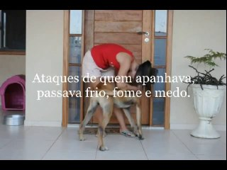 Cachorro adotado ataca