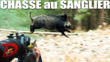 Chasse sangliers : des moments incroyables 2011-2012