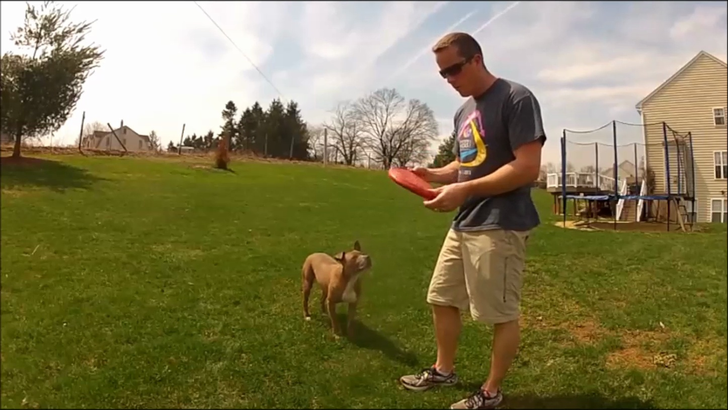 Review of Kong Flyer Frisbee for Dogs