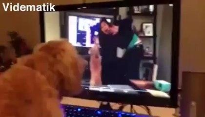 Kendi görüntüsüne havlayan köpek