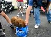 The Bud Light Guard Dog - Funny Guard Dog