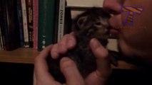 Les Chats détestent les câlins... Compilation de chats marrants!