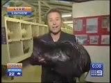 Reporter attaqué par un poulet géant! Peur de sa vie...