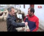 kars çalgavur köyü koyun kuzu bulusması www.kha.com.tr kafkas haber ajansı kha