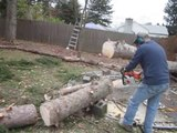Magic Tree Rises From The Dead After Being Cut By A Chainsaw
