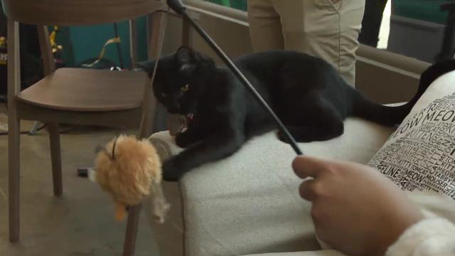 Cat Coffee Shop Opens