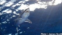 805-Pound Shark Caught Off The Coast Of Florida