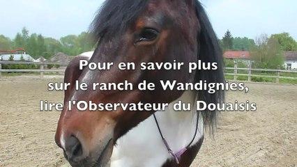 A Wandignies-Hamage, on murmure à l'oreille des chevaux