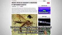 Une nouvelle mouche préhistorique découverte dans de l'ambre