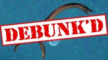 Debunk'd: Loch Ness Monster, Powdered Alcohol, Male Extinction