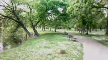 One Day In The Park - Dusko Kulis - Mix Best 1