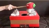 Le jeu de la taupe avec des chats... Cat Whac-A-Mole