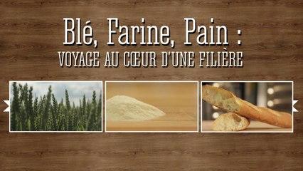 Le Chemin du Blé à la Farine  au Pain