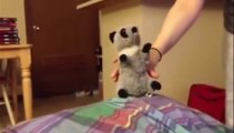 humour gag video rire drole chat