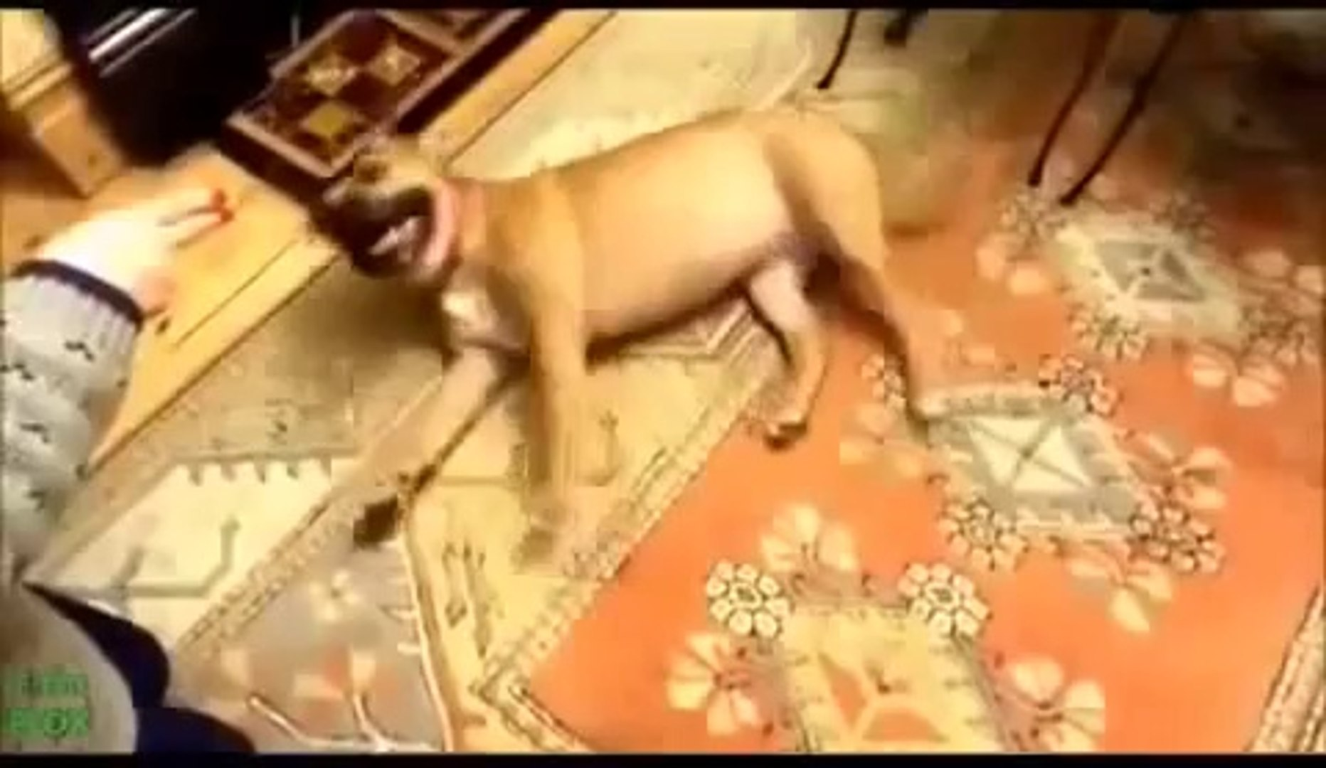 Animals Playing Dead Compilation 2014 TOP Animals Playing Dead Compilation 2014 HD Animal Funny Vide
