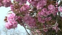 LES W-D.D. MICHOU SATURDAY NEWS - 5 AVRIL 2014 - PLANTATIONS D'ARBRES AU STADE NAUTIQUE.