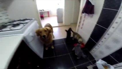 Sana Mama Yok Şakası Yapılan Köpeğin Dramı