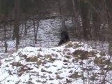 DISTURBING BIGFOOT ENCOUNTER CAPTURED ON VIDEO