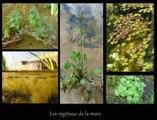 Cardie Caen - Favoriser la biodiversité au Collège Nelson Mandela à Hérouville-Saint-Clair