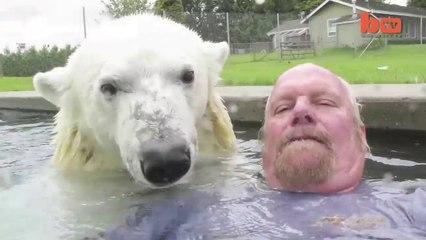 Un Orso polare che fa il bagno e nuota con un uomo in piscina