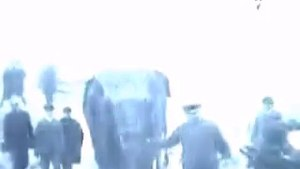 Topsy, la elefanta que murió en la silla eléctrica.