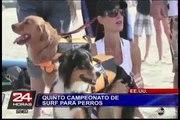 California celebró la quinta edición del campeonato de surf para perros