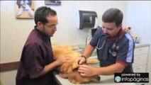 Animal Medical Hospital / Hospital Veterinario Cabo Rojo