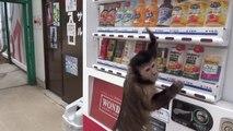 Un singe extrêmement intelligent
