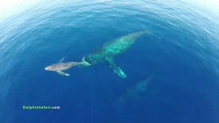 Un Drone cattura immagini straordinarie al largo dell'isola di Maui