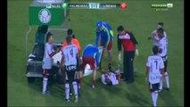 Milton Leite narra briga entre quero-quero e mariposa durante jogo do Palmeiras. (HD)