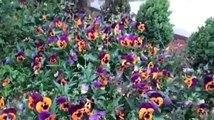 Yaşayan Müze ve Çiçekler