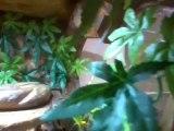 terrarium vivarium avec deco sur mesure fait maison ideal pogonna lezard et autres reptiles