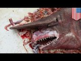 World's most disgusting animal? Goblin shark caught off the coast of Florida