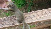Un écureuil comme animal de compagnie : trop mignon!