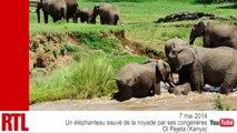 VIDÉO - Un éléphanteau sauvé de la noyade par son troupeau