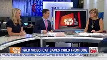 Hero Cat Saves Young Boy From Dog Attack In Bakersfield - Saves Child CCTV VIDEO Kid