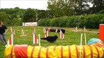 entrainements agility heaven mai 2014