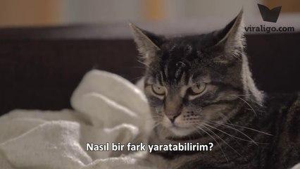 Çevre Dostu Kedi Norman'ın Size Söyleyecekleri Var :)