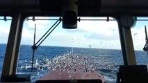 Invasion de mouettes sur un navire!