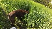 Elliot fait son jeu dans le blé!