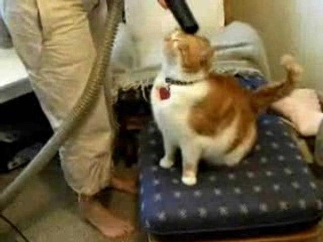 Gatto e aspirapolvere