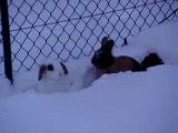 Schneehasen2