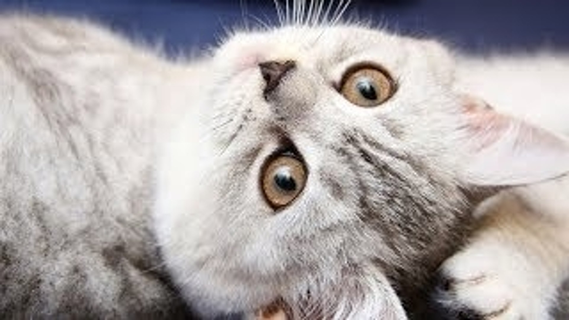 Cute Funny Cats Videos & Music