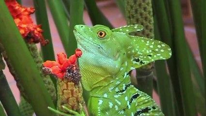 Basilisk - The Jesus Christ Lizard