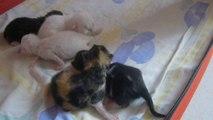 mes jolis bébés nés le 7 mai 2014 4 fememelles et male