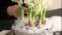 Une composition florale hivernale blanche comme neige
