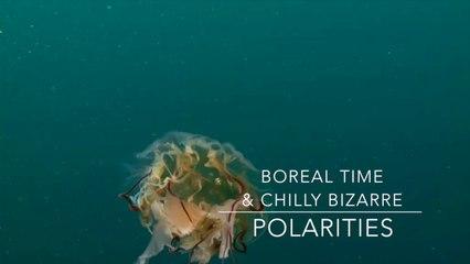 Tristan Nihouarn - Boreal Time & Chilly Bizarre